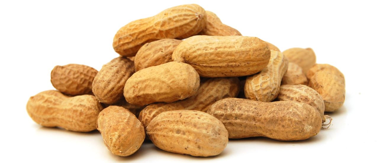 Peanut allergies may soon be a concern of the past