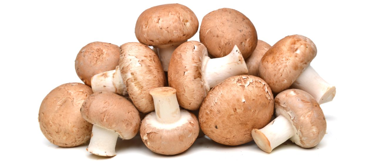 Mushroom juice: The latest drink trend!