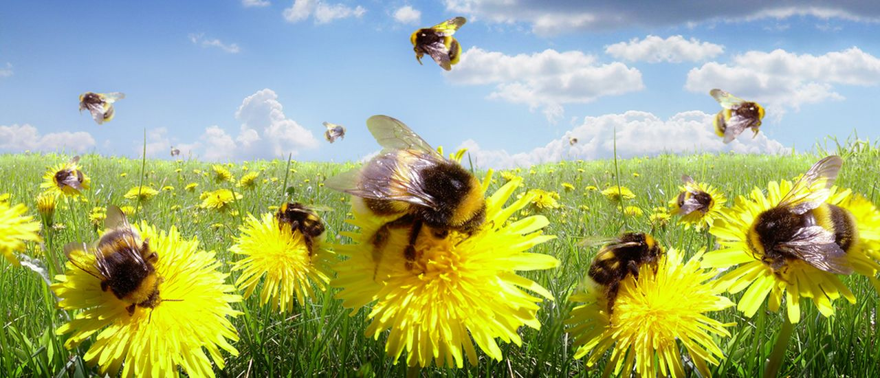 http://www.hellodoctor.co.za/wp-content/uploads/2014/10/Bees-in-the-meadow.jpg