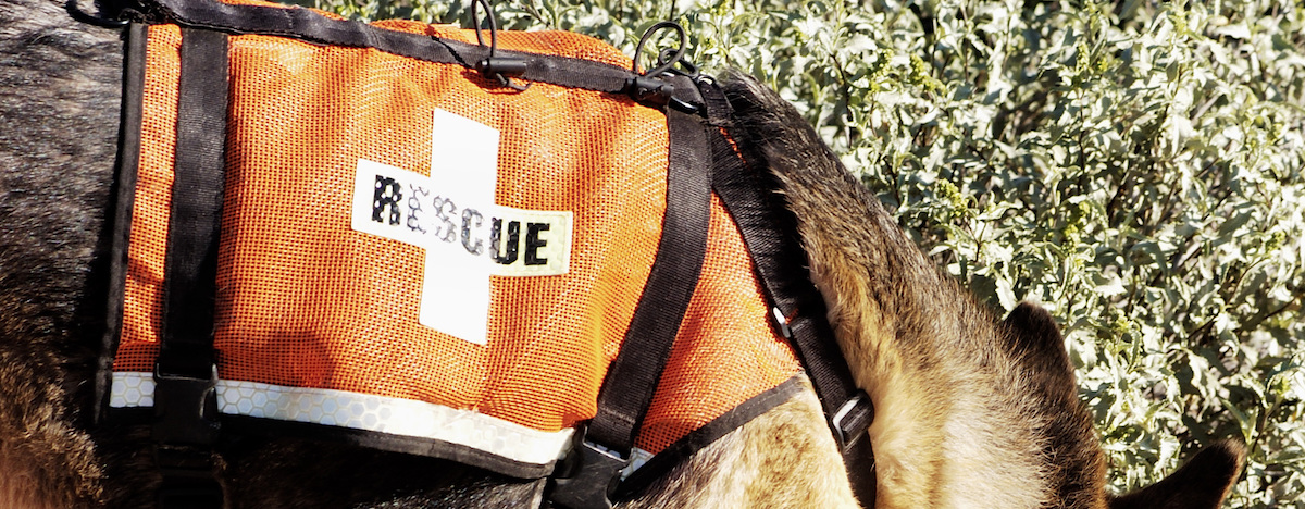 Four animals that can save your life