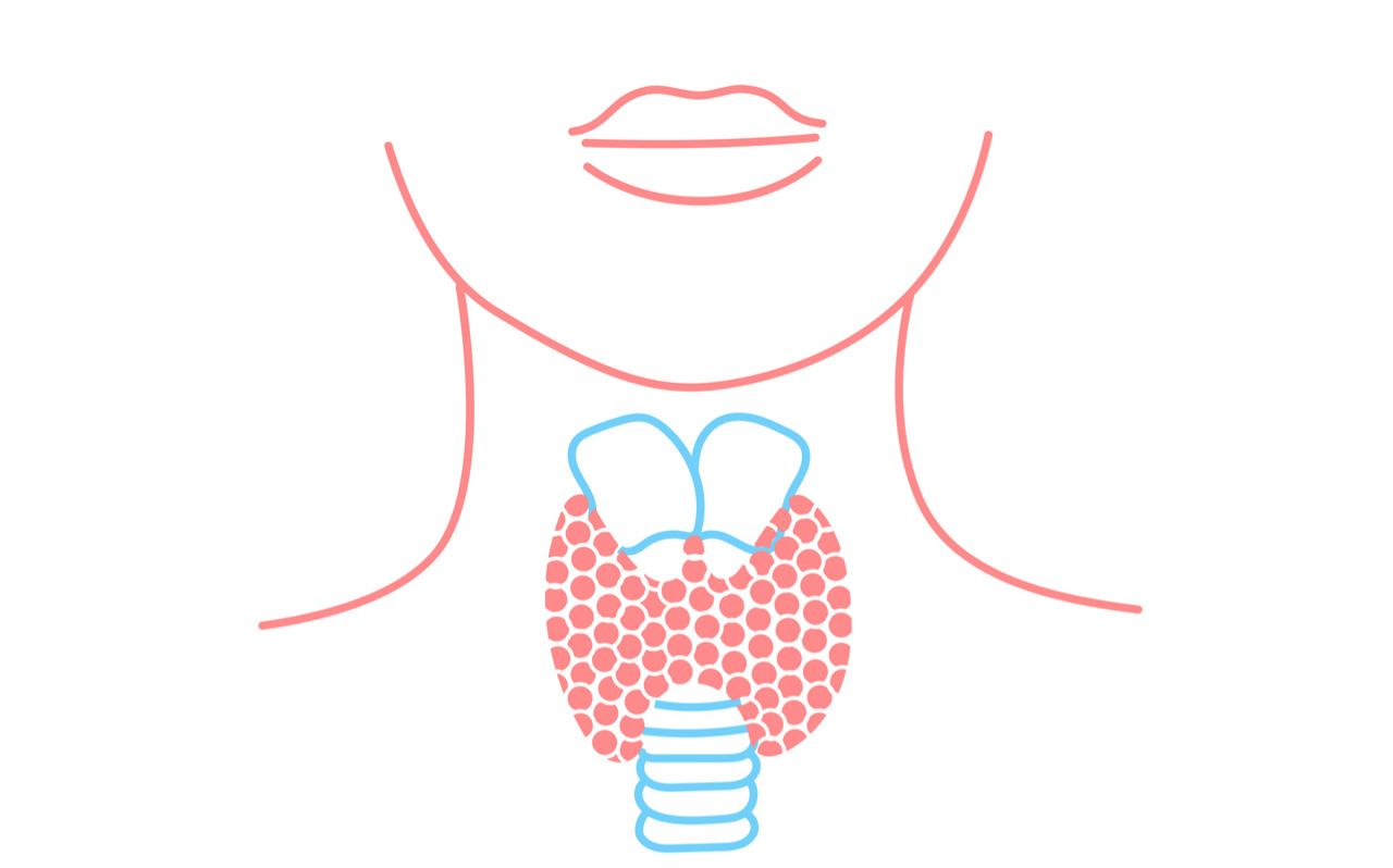 Get to know your thyroid