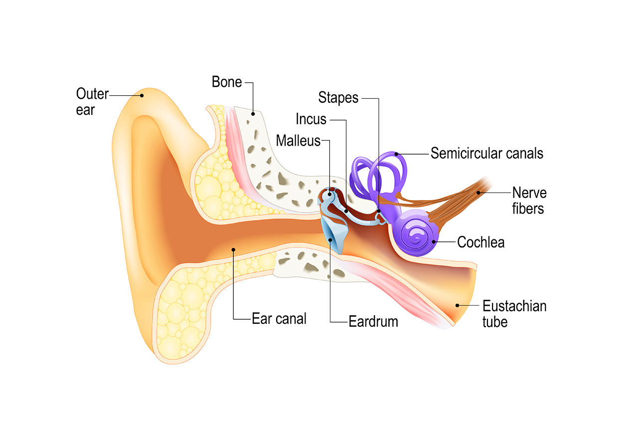 What is this fluid coming from my ear?